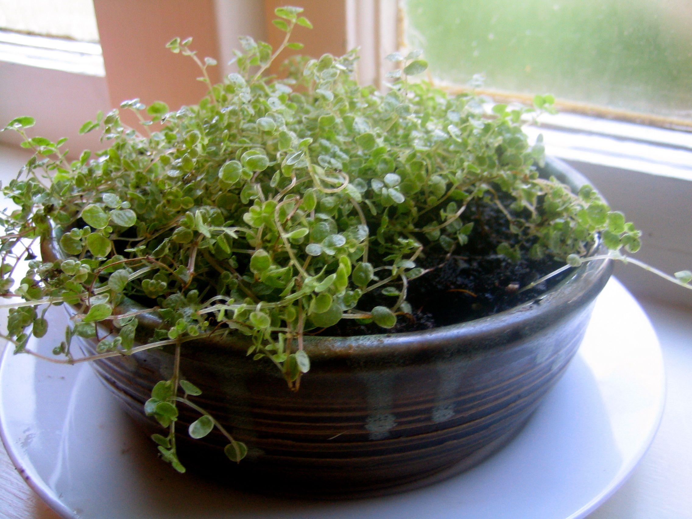 century shallow planter mccoy pair planters product chairish mid