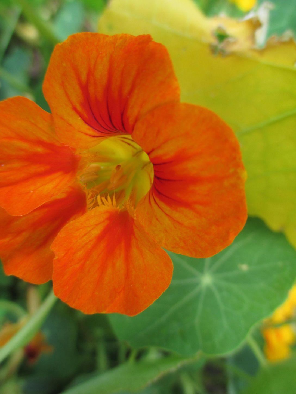 garden_5