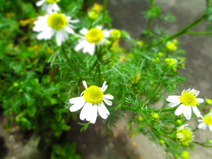 garden_8