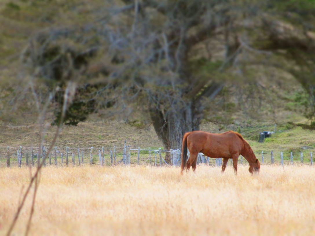 sum_horse