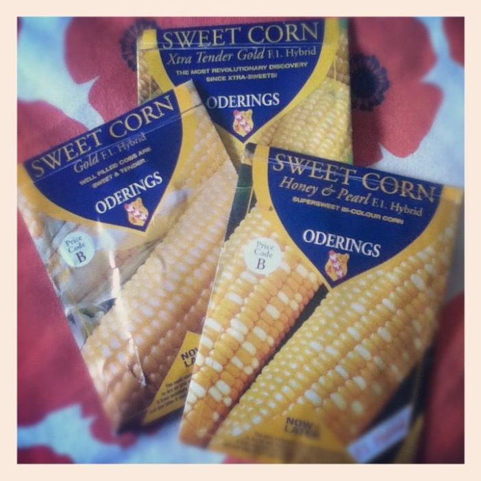 corn_seeds