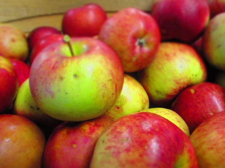 apples_6