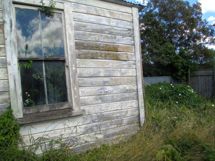 shed_plant